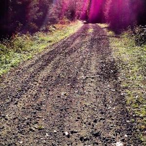 Børtenveien